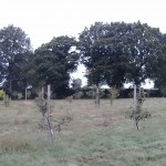 Sussex Fruit Trees Orchard at Hook Farm